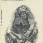L'histoire du singe, de Sumatra à St-Gilles-sur-Vie.