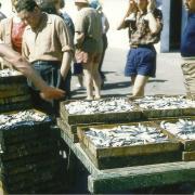 Croix-de-Vie, l'arrivée de la sardine.