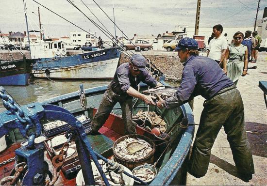 St-Gilles-Croix-de-Vie, chalutier déchargeant son poisson.