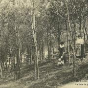 St-Gilles-sur-Vie, le bois de pins près de la plage.