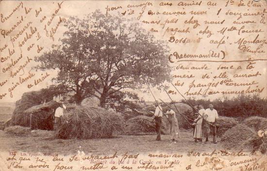 Le battage du blé à la gaule en Vendée.