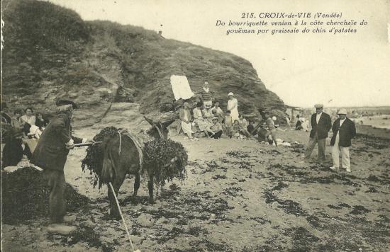 Croix-de-Vie, récolte du goëmon.
