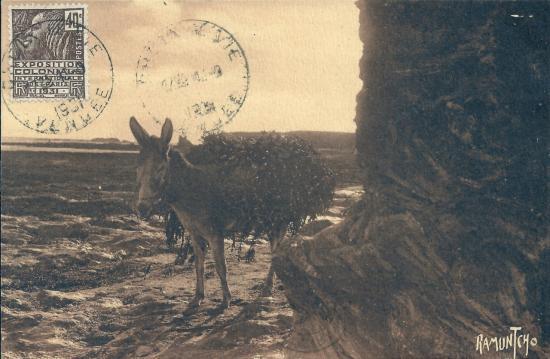Croix-de-Vie, les ânes transportent le goëmon.