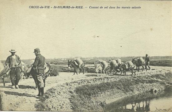 Croix-de-Vie-St-Hilaire-de-Riez, convoi de sel dans les marais.