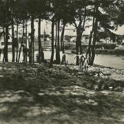 St-Gilles-sur-Vie, à travers le pins.