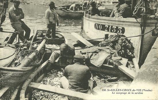 St-Gilles-Croix-de-Vie, le comptage de la sardine.
